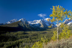 Winter and wutumn in the mountains of Idaho. Fall colors and a deep green forest with snow caped mountains royalty free stock image