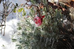 Winter& x27; freddo di s Fotografie Stock Libere da Diritti