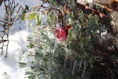 Winter& x27; frio de s Fotos de Stock Royalty Free