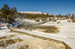 Winter in Yellowstone National Park Royalty Free Stock Image