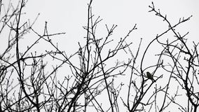 treetops and an bird