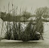 Winter zasnezhenoe lake with reeds, snow, water royalty free stock images