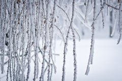 Winter-Zeilen Lizenzfreies Stockfoto