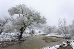 Winter in Zion National Park, Utah Royalty Free Stock Photography