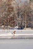 Winter-zwemmer die voorbereidingen treffen te zwemmen Royalty-vrije Stock Foto