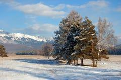 Winter0037 Royalty-vrije Stock Afbeeldingen