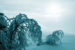 Winterabbildung Stockbilder