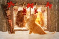 Winterabbildung mit Miezekatze, Schnee und Schneeflocke Lizenzfreie Stockfotos