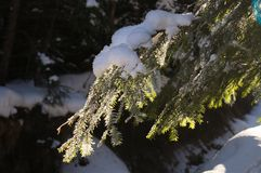 Winterabenteuer Snowy-Wald Karpaten ukraine stockbild