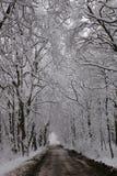 Winterallee Stockfotos