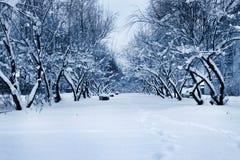 Winterallee Stockfoto