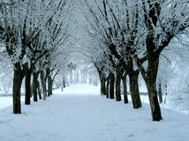Winterallee Lizenzfreie Stockfotografie