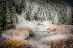 Winteranfang Easley Creek Idaho Lizenzfreie Stockfotos