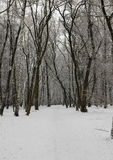 Winteransicht des Waldes Stockfotografie