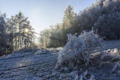 Winteransicht von den Bäumen bedeckt mit Frost Lizenzfreies Stockfoto