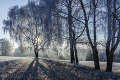 Winteransicht von den Bäumen bedeckt mit Frost Stockbilder
