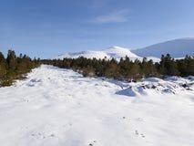 Winteransicht von Tom ein Choinnich u. Ben Wyvis von Garbat-Wald Lizenzfreies Stockfoto