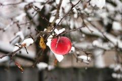 Winterapfel 2 lizenzfreies stockbild