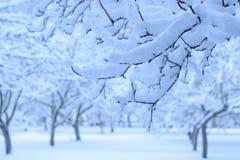 WinterApfelbaumgarten Stockfotos
