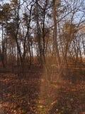 Winterart Januar-kühles Wetter stockfoto