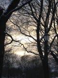 Winteratmosphäre Lizenzfreies Stockbild