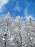 Winterbäume Lizenzfreie Stockfotografie