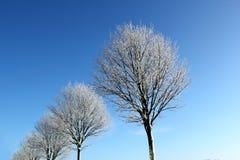 Winterbäume Stockbild