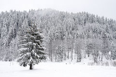 Winterbäume Stockfoto