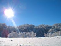 Winterbäume Lizenzfreies Stockfoto