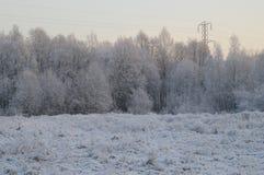 Winterbäume stockfoto
