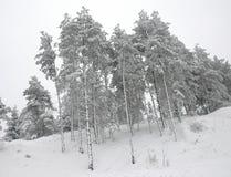 Winterbäume Lizenzfreie Stockbilder