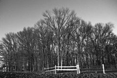 Winterbäume. Lizenzfreies Stockbild