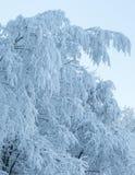Winterbäume abgedeckt mit Hoarfrost Stockfotografie