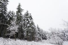 Winterbäume abgedeckt mit Schnee Stockbild