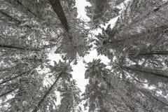 Winterbäume abgedeckt mit Schnee Lizenzfreie Stockfotografie