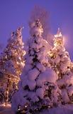 Winterbäume abgedeckt mit Schnee Lizenzfreies Stockbild
