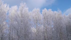 Winterbäume auf blauem Himmel stock video footage