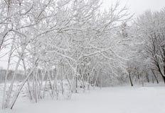 Winterbäume bedeckt im weißen flaumigen Schnee stockbild