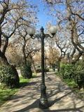 Winterbäume in Chile Lizenzfreies Stockbild