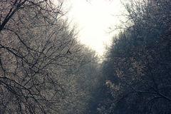 WinterBäume des Waldes im Schnee Stockbild