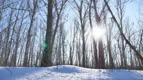 WinterBäume des Waldes im Schneegrellen glanz der Sonne, Sonnenlichtlandschaftsnatur stock video