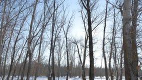 WinterBäume des Waldes im Schneegrellen glanz der Sonne, Sonnenlichtnaturlandschaft stock video footage