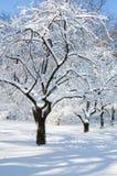 Winterbäume in einem Schnee Lizenzfreies Stockfoto