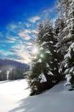 Winterbäume III lizenzfreie stockfotografie