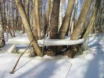 Winterbäume im Eis in der Flutzeit, Litauen Stockbilder
