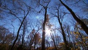 Winterbäume im Himmel stock video footage