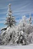 Winterbäume im Schnee Stockfotos