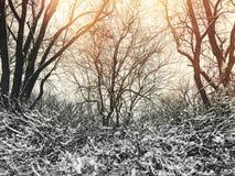 Winterbäume im Sonnenuntergang Lizenzfreie Stockfotos