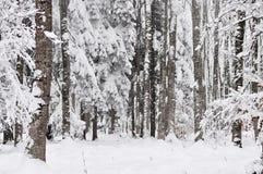 Winterbäume im Wald Stockbilder