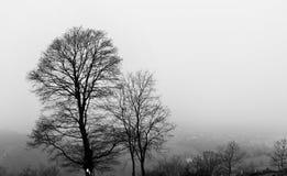 Winterbäume oben auf den Hügel. Stockfoto